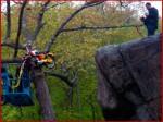 "Bike in Tree from ""Moonrise Kingdom"""